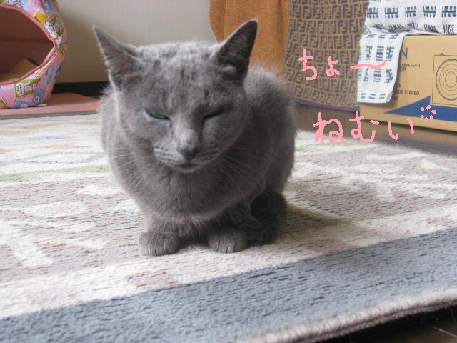 08.11.11眠そうなみや コメント付き.jpg